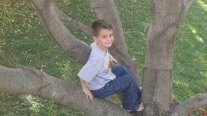 My son in a tree in our backyard